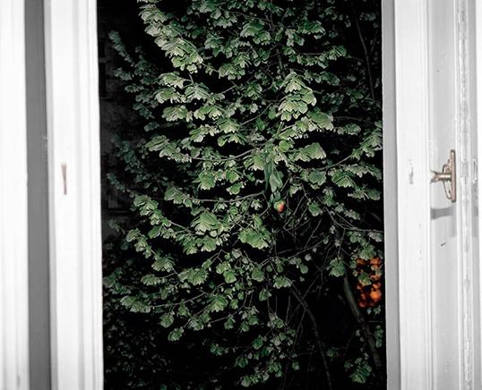 VENTANA Y FLORImpresión Digital100 x 85 cm2008