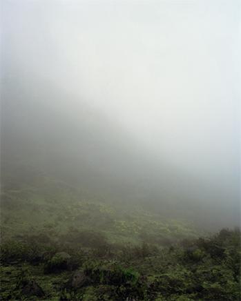 SIN TITULO (FLORES DE DESIERTO)fFotografía analógica copia ink jet72 x 90 cm c/u2010